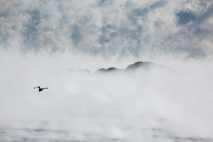 Sea Smoke