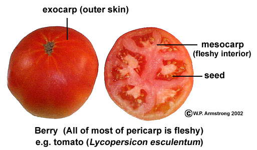 tomatfr1