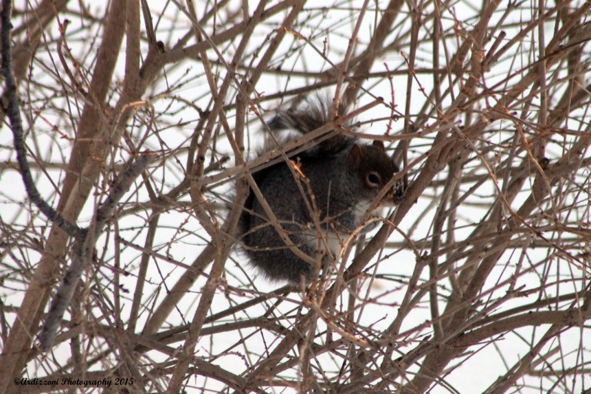 February 16, 2015 squirrel keeping warm