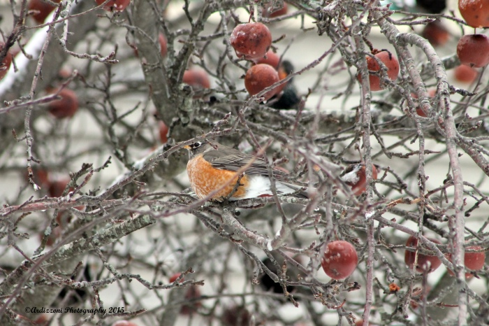 February 5, 2015 hanging in apple tree