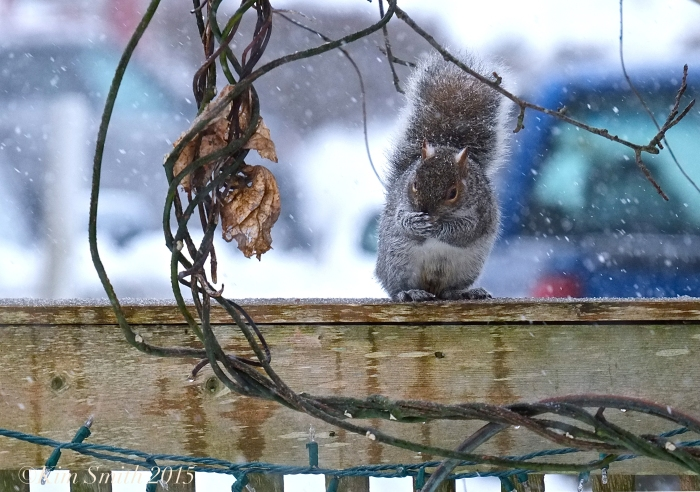 Squirrel snow