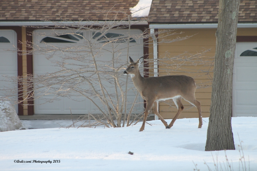 March 22, 2015 our morning visitor