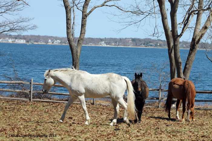 April 18, 2015 pretty polo ponies