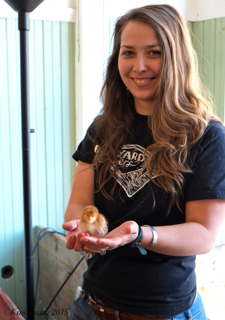 Backyard Growers Baby Chicks Meghan ©Kim smith 2015 copy