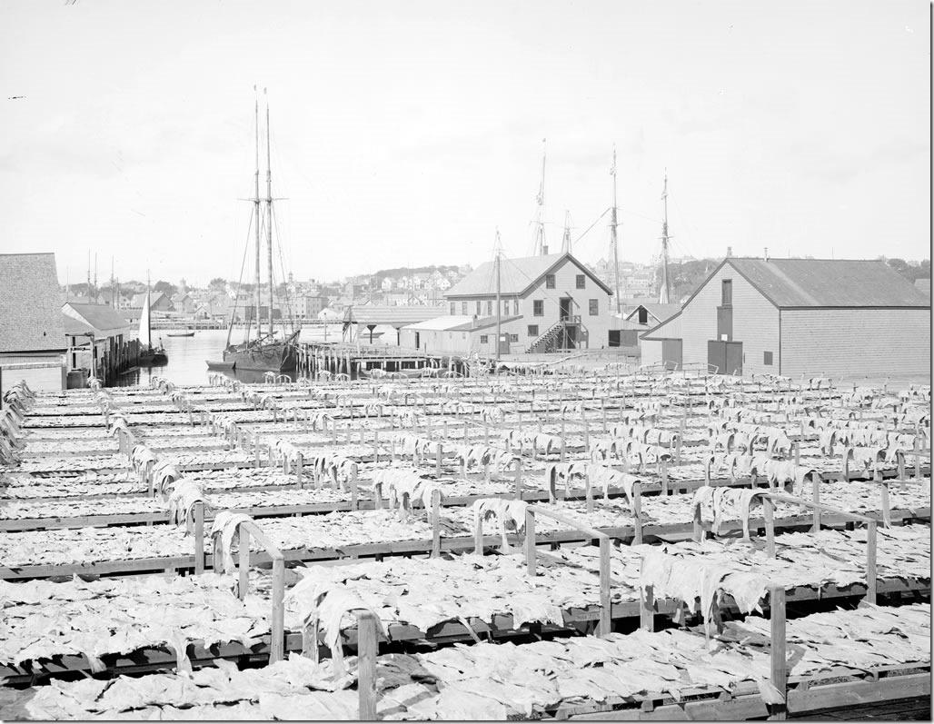 Gloucester_Flake_Yard_1906_1024