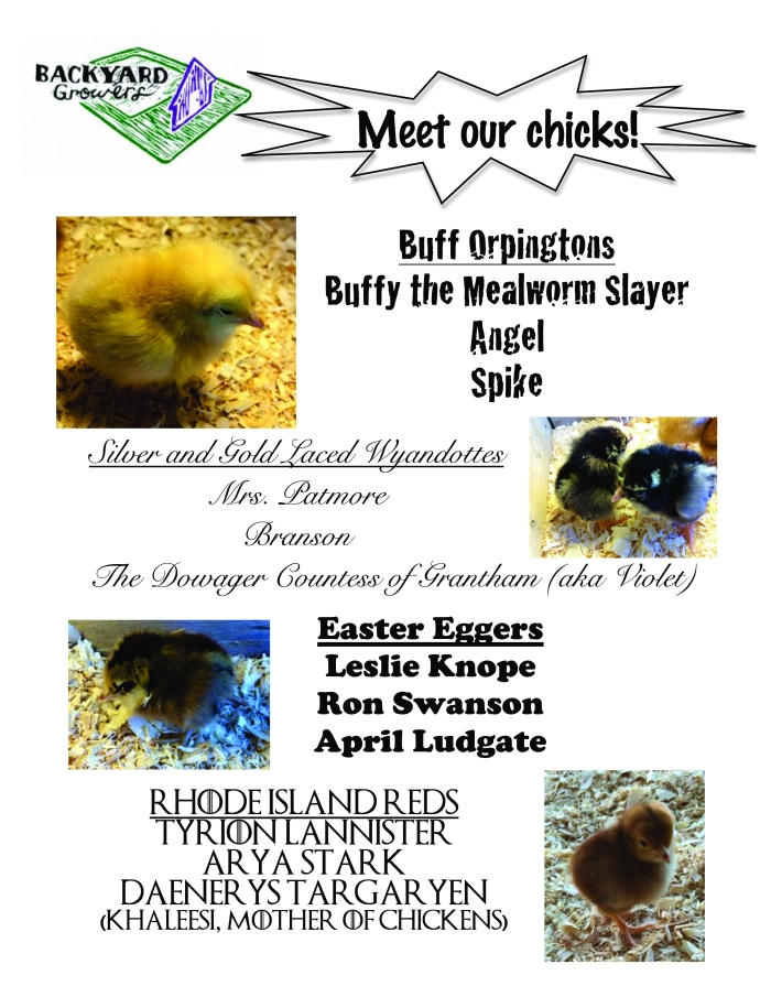 Microsoft Word - Meet our Chickens with Pics!!.docx