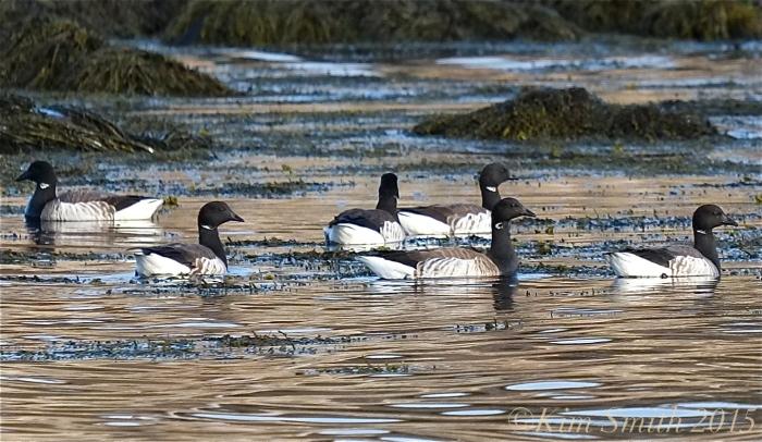 Brants Cape Ann Massachusetts ©Kim Smith 2015