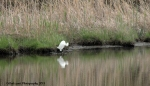May 22, 2015 Egret waiting for the long weekend