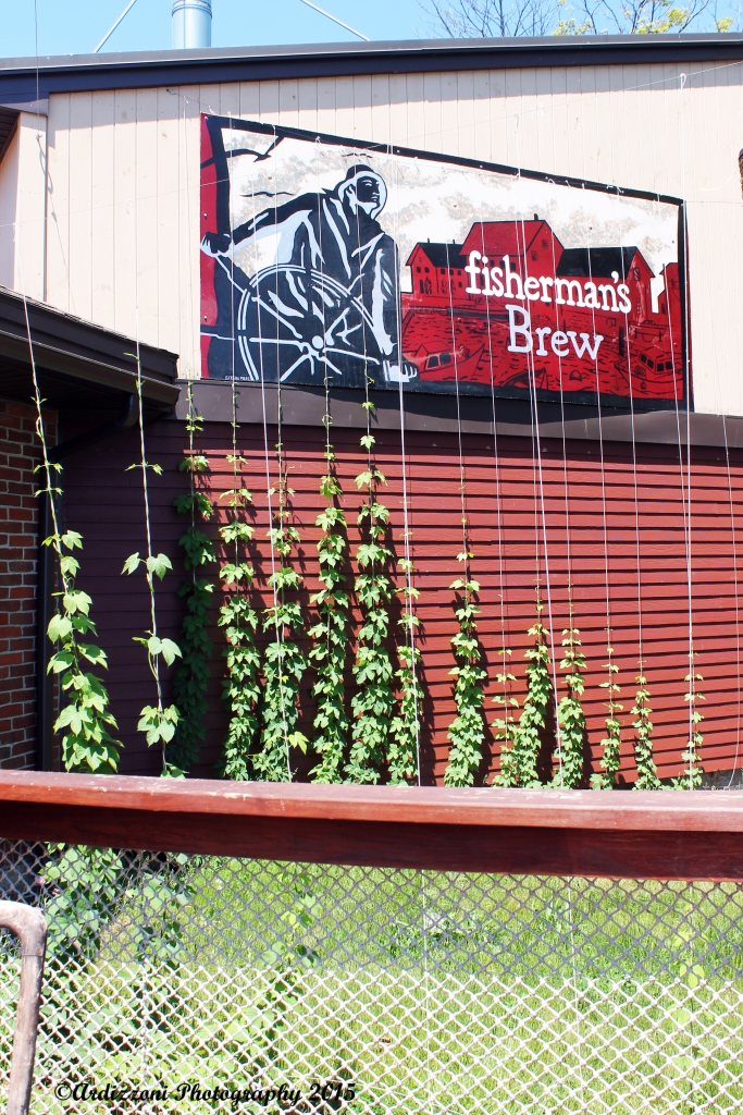 May 29, 2015 Looks what growing at the brewery