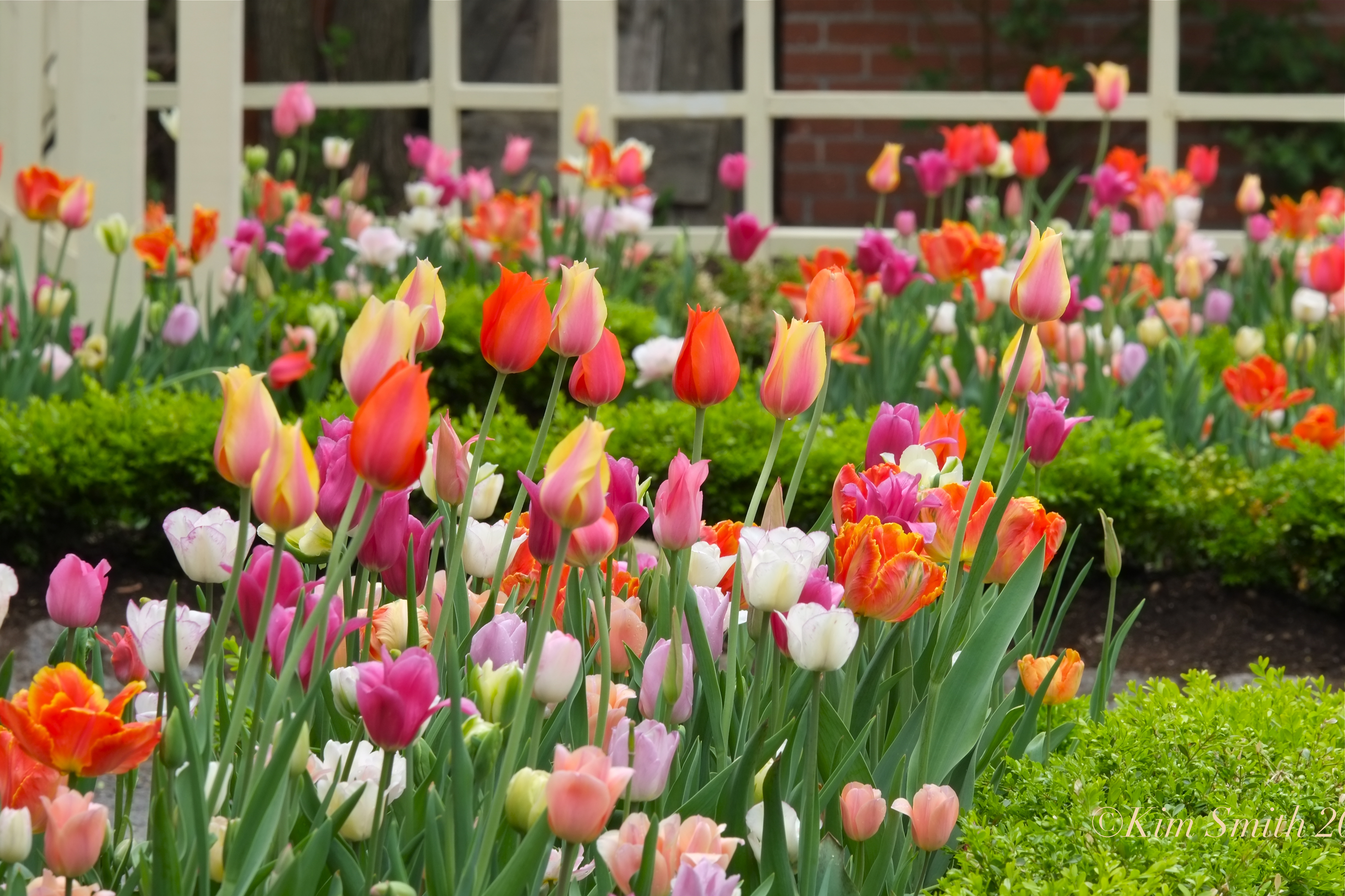 tulip-garden-mary-prentiss-inn-cambridge-6-c2a9kim-smith-2015.jpg