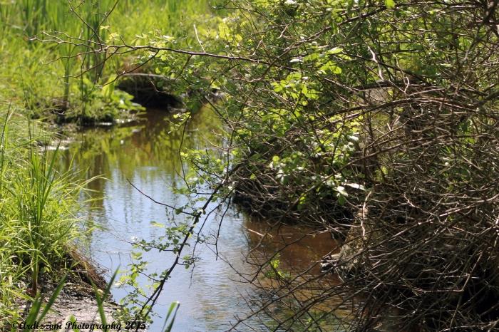 June 4, 2015 stream entering Clarke Pond from Magnolia Beach