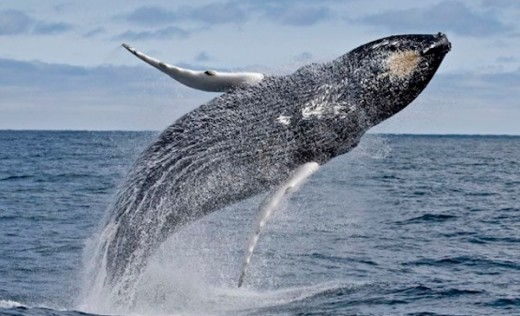 7-seas-whale-watch-51d2377354b9720f71005f0b