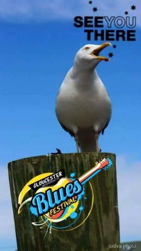 gbf-gull