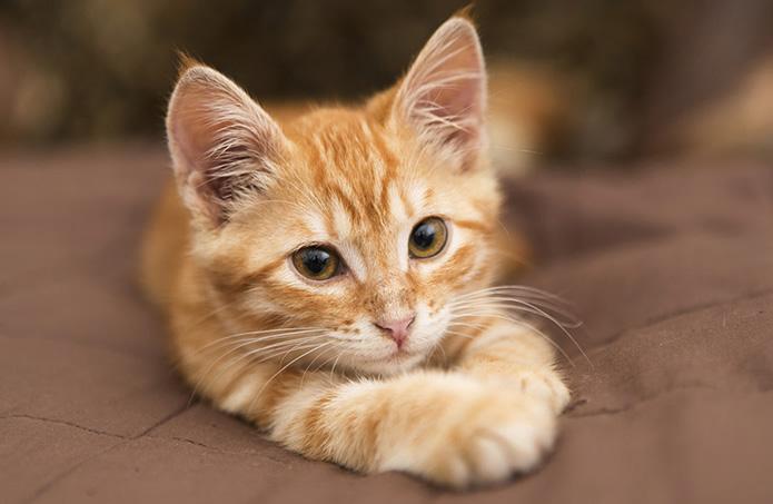 kitten focus