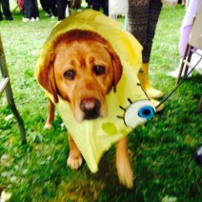 NSMC Cancer Walk Wet Dog FullSizeRender