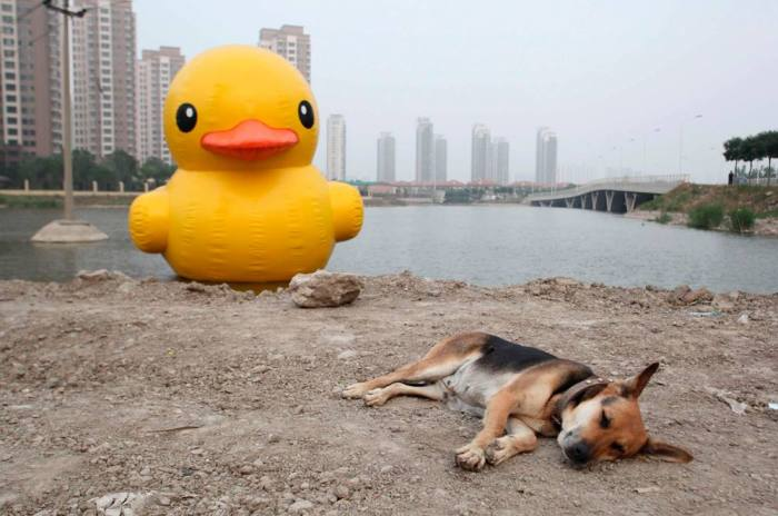 Anyone know where this dog keeps his duck? Maybe we could borrow it while she is sleeping.