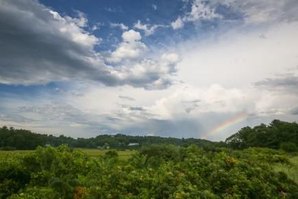 Donnas_Rainbow_Magnolia-GY8A0205