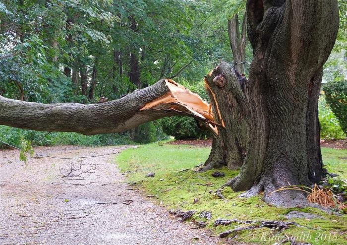 downed tree ©Kim Smith 2o15