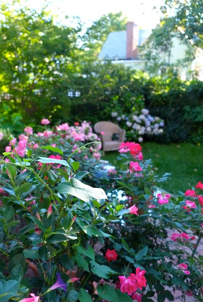 Gloucester Garden ©Kim Smith 2015