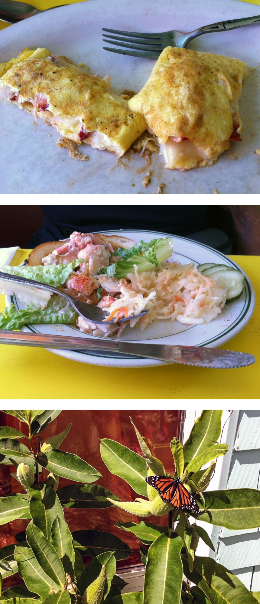 monarch and lobster at sailor stans