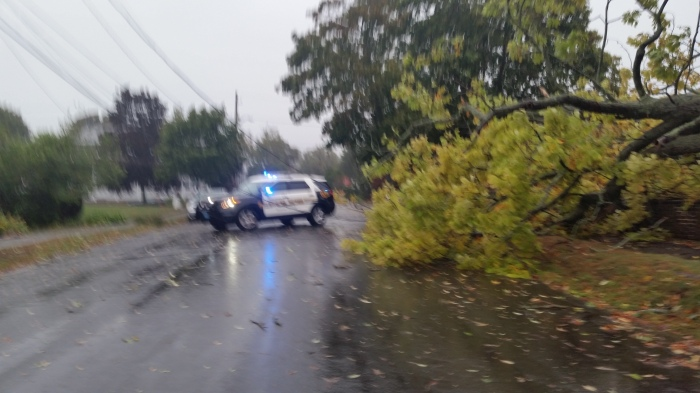 20150930_104457 tree down on Lexington Avenue