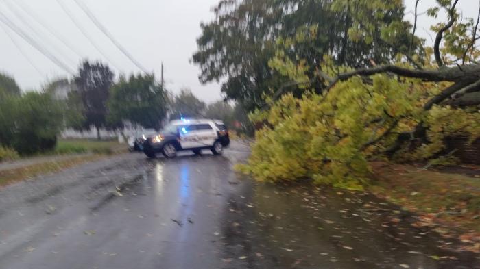 20150930_104457 tree down on Lexington Avenue
