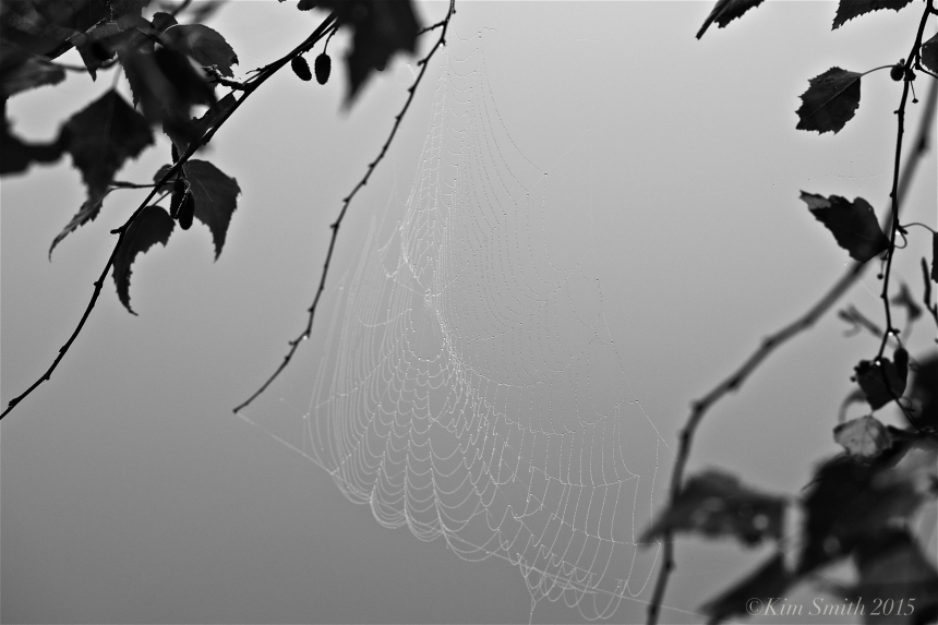 Spider web Clark Pond ©Kim Smith 2015