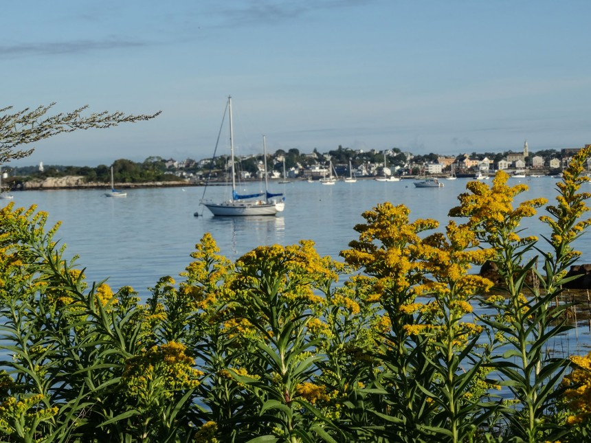 goldenrod on eastern point