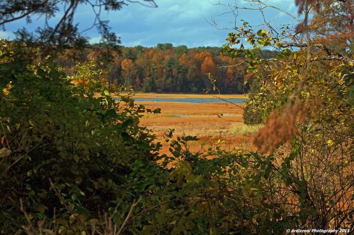 October 29, 2015 The marsh behind Lobsta Land
