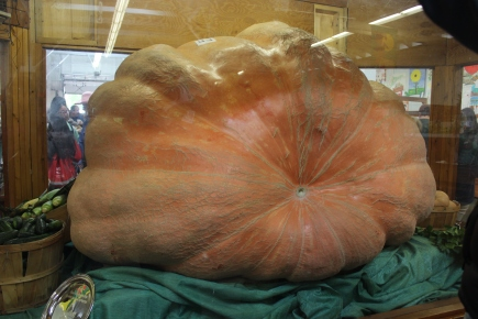October 4, 2015 One big Pumpkin