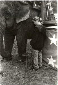 Elephant's Freind resize