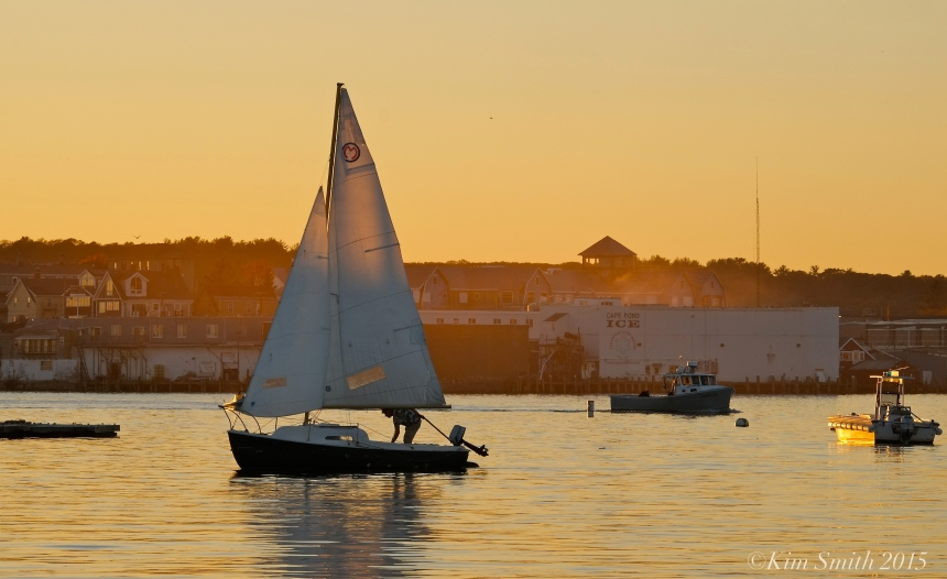 Indian Summer Sail Gloucester harbor ©Kim Smith 2015