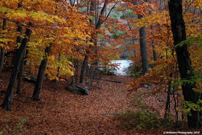 November 5, 2015 colors of Wallace Pond