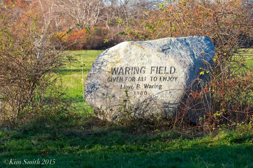 Waring Field ©Kim Smith