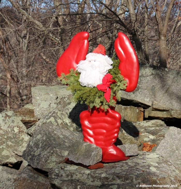 December 16, 2015 Lobster Claws