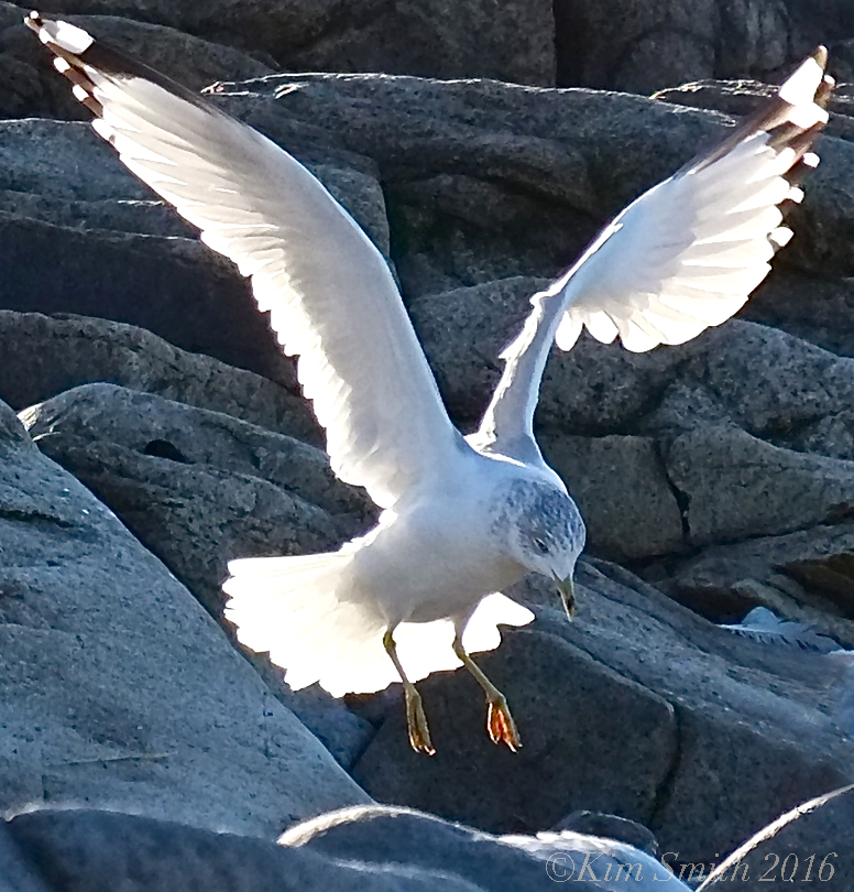 Sunlight Through Gull's Wings