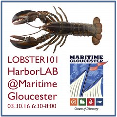 lobster-101-square-w240.jpg