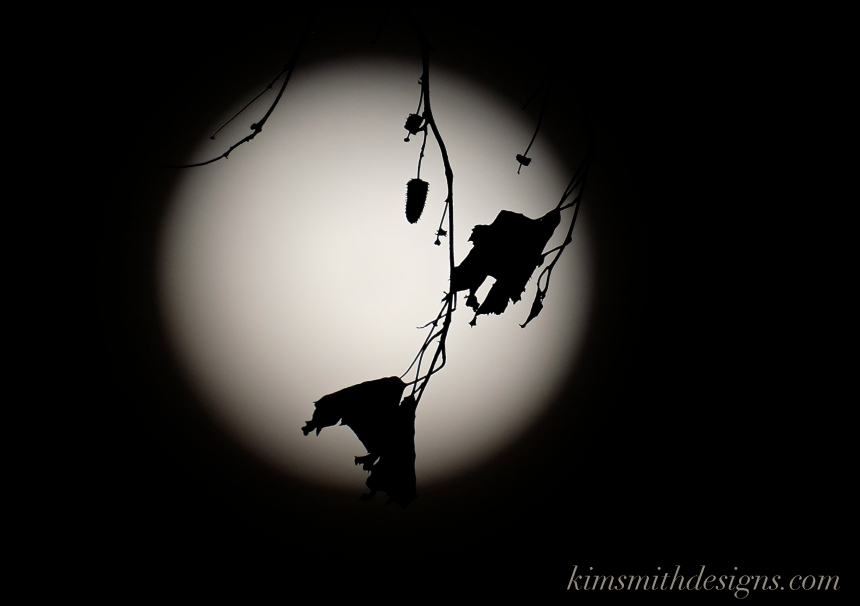 Snow Moon February Niles Pond Birch Tree kimsmithdesigns.com 2016