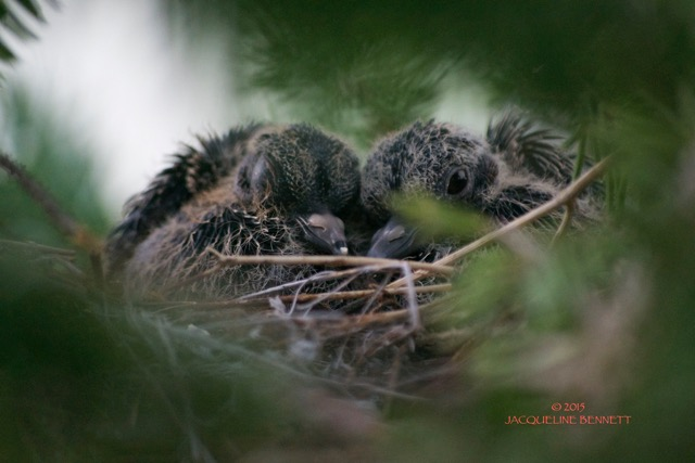 2 babies (1)
