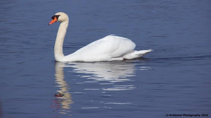 February 28, 2016 Mr. Swan at Niles Pond