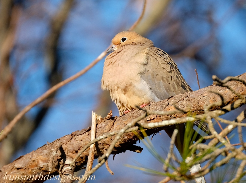 Mourning Dove kismithdesigns.com