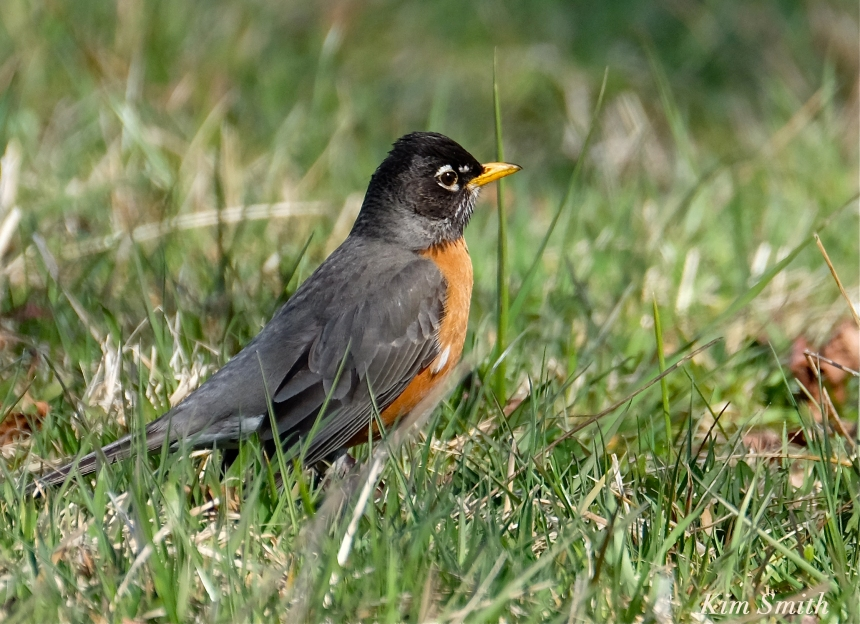 American Robin Kim Smith