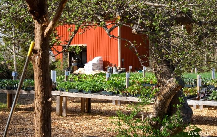 Cedar Rock Gardens Kim Smith