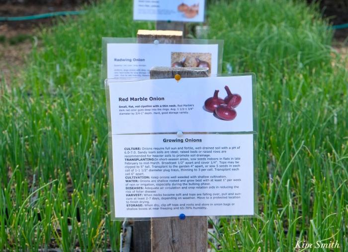 Cedar Rock Gardens onions Kim Smith