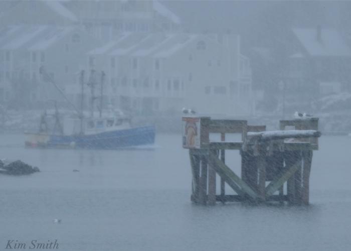 Gloucester harbor Greasy pole snowy day Kim Smith