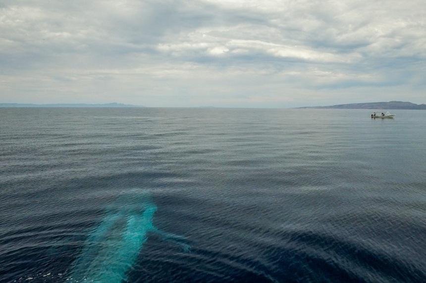 Blue body & boat[2]