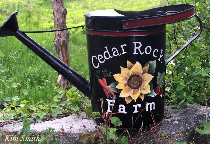 Cedar rock Garden watering can copyright Kim Smith