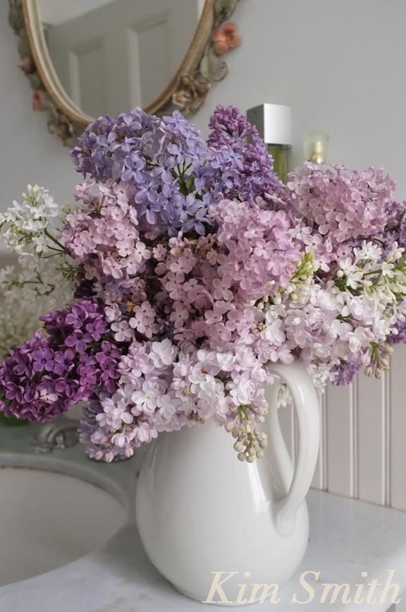 Fragrant Lilacs -2 copyright Kim Smith copy