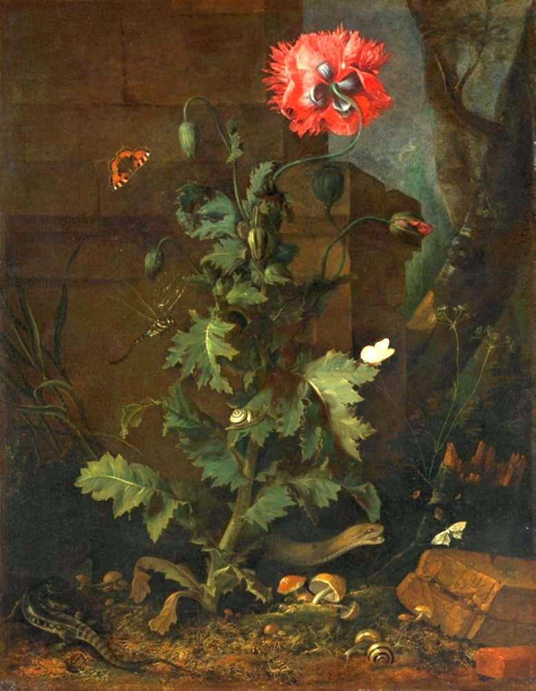 Otto_Marseus_van_Schrieck_-_Still_Life_with_Poppy,_Insects,_and_Reptiles,_ca_1670.jpg