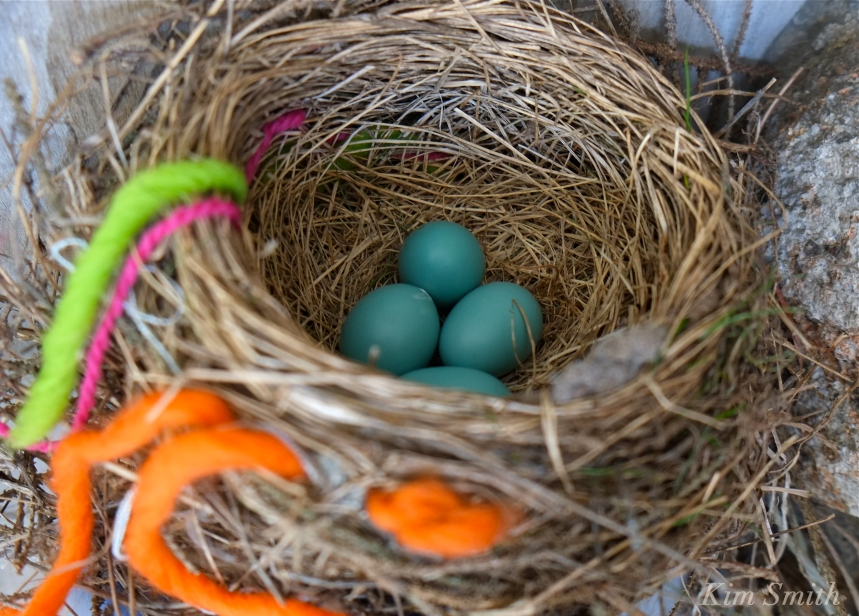 Robin's Nest copyright Kim Smith